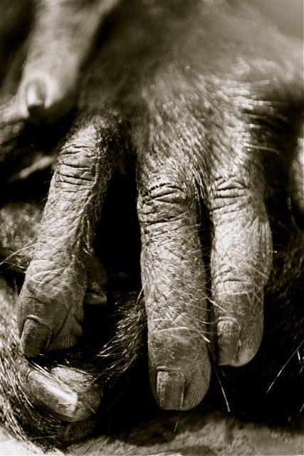 monkey hands by malkiecampbell