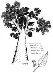 Pohon Kemiri - Candlenut Tree by Adflre