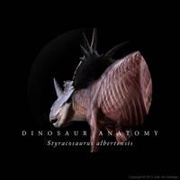 Styracosaurus Anatomy