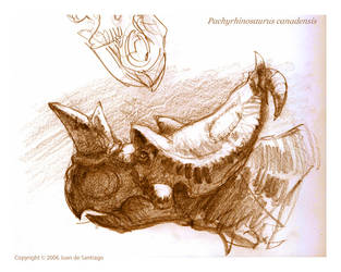Pachyrhinosaurus sketch by Red-Dilopho