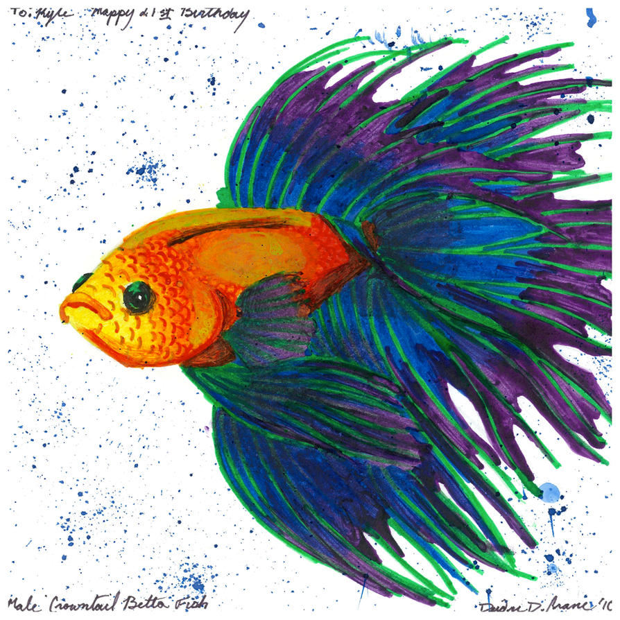 Crowntail betta by blufyrdragon4 on deviantart for Crowntail betta fish