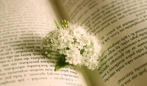 Is this a romantic novel? by GloomySisterhood