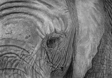 Nellie (Pencil Drawing) by Benadia