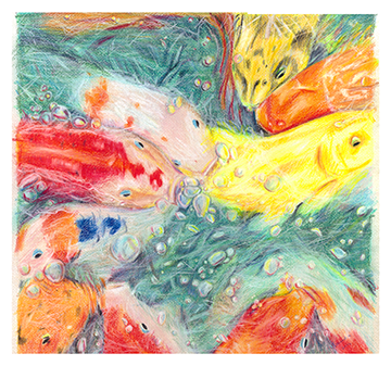 Koi Color Pencil Drawing Benadia by Benadia