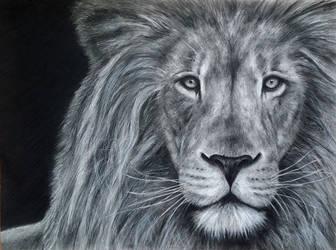Lion 2014 by Benadia