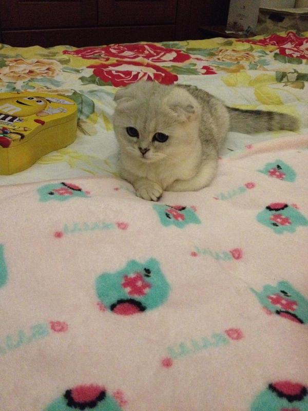 Momo:wat r u thinking? by ltxg13