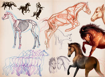 horse study set by Taikgwendo