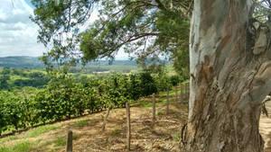 Rural4