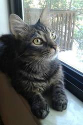 Lemmy Cat