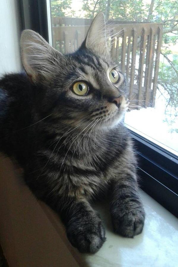 Lemmy Cat by FluffySquirrel