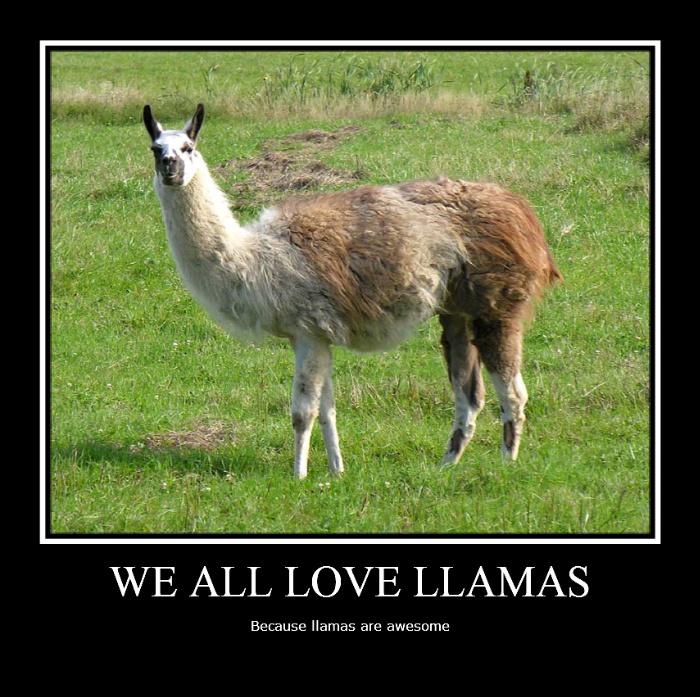 Llamas With Afros Llamas favourites by