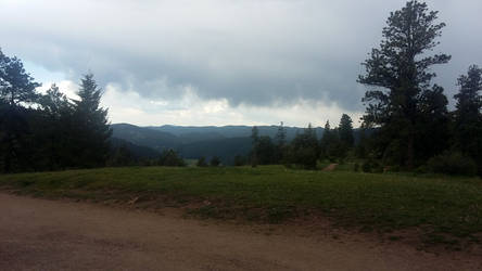 Mt Falcon Meadow 2