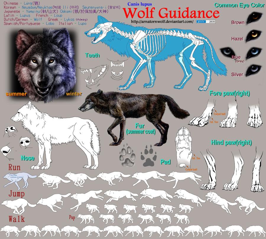 Wolf Guidance by ArnaTornwolf
