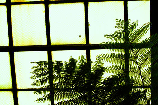 Ferns In The Conservatory