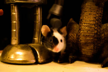 Thompson The Mouse