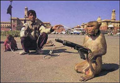 http://fc09.deviantart.net/fs50/f/2009/307/c/1/army_monkey_by_drag_racer_1.jpg