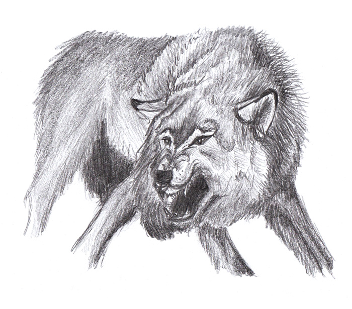 7b891bb94 Wolf 04 - Angry Wolf by Finnisterre on DeviantArt