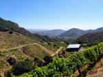 Malibu Wine Safari  by bironicheroine