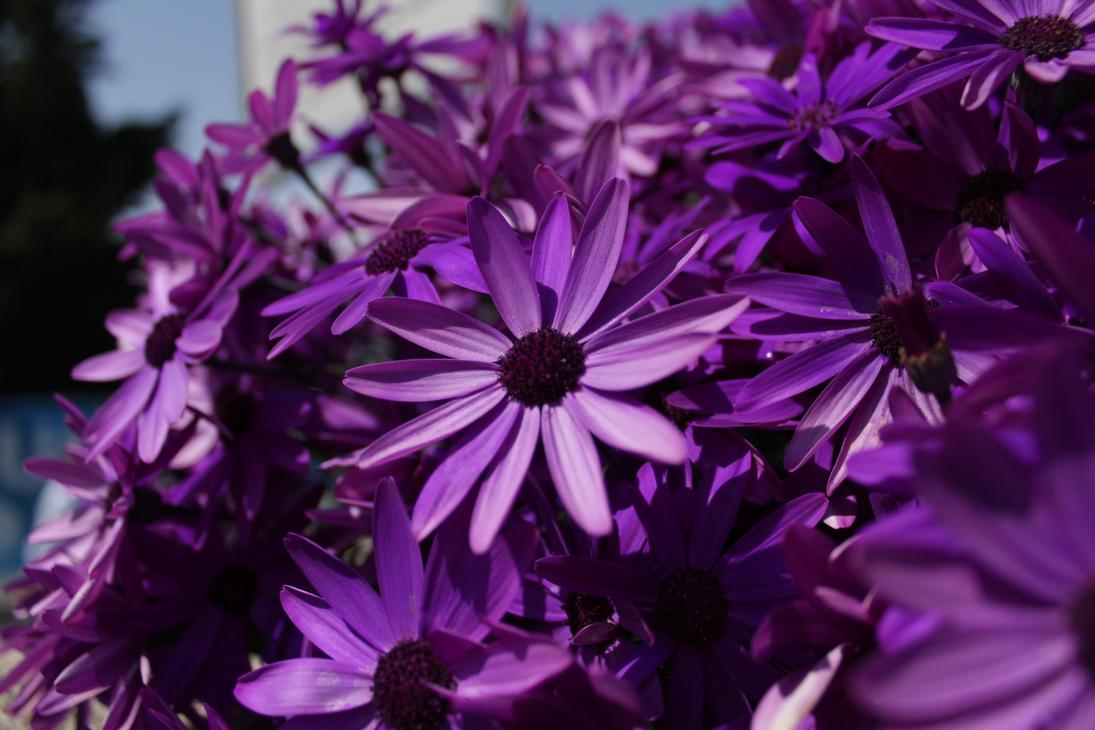 VIOLET - Page 3 Flower_by_pulsartge-d4qhr6v