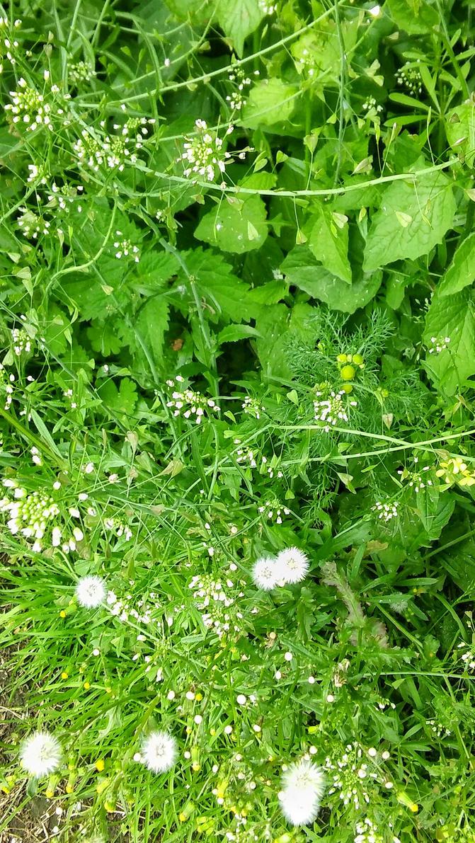 Green Grass White Flowers By Ori Or Artsy On Deviantart
