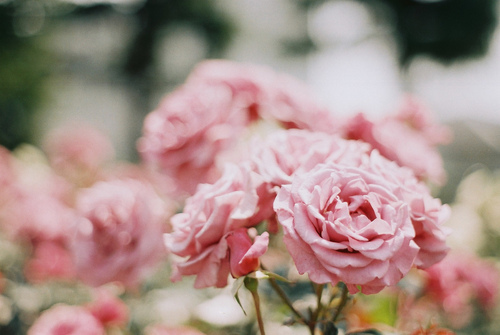 Like Pink Cottoncandy. by AuditoryArt