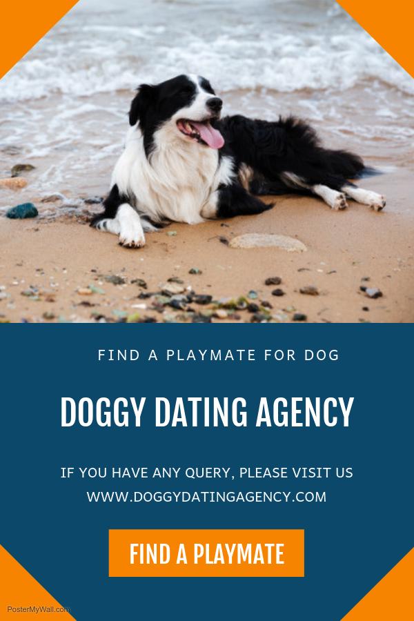 Online-Dogie-Dating