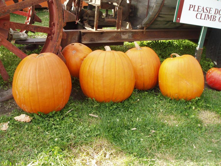 Pumpkin Stock 4 by GreenEyezz-stock