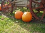 Pumpkin Stock 5