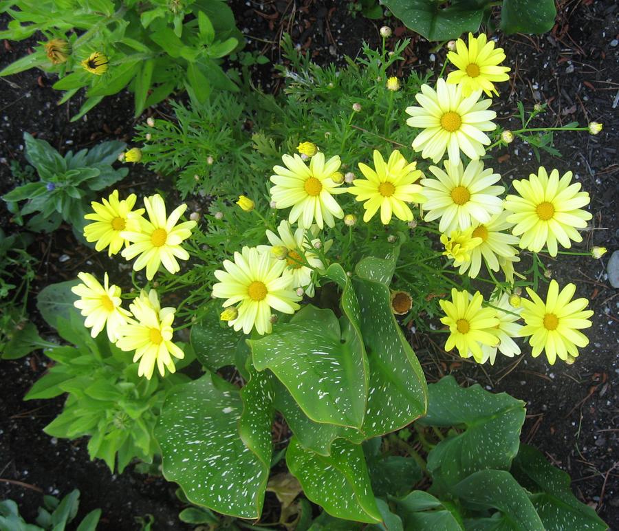 Pale yellow flowers ii by greeneyezz stock on deviantart pale yellow flowers ii by greeneyezz stock mightylinksfo