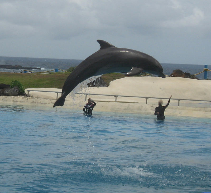 Dolphin I by GreenEyezz-stock