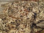 Drift Wood Bark
