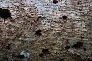 Holy Tree Bark Batman by GreenEyezz-stock
