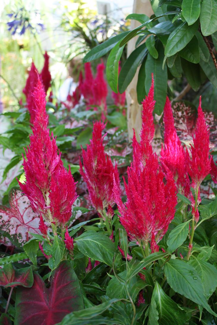 Pink tropical plant flower by GreenEyezz-stock