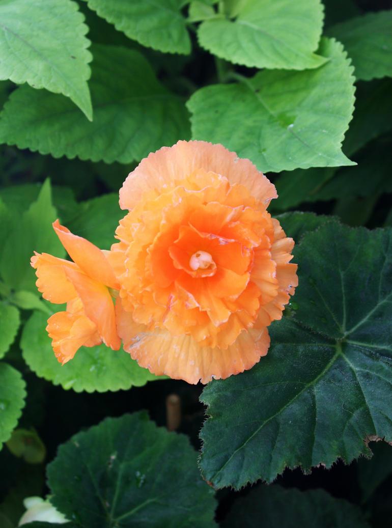 Orange Yellow Tropical Flower by GreenEyezz-stock