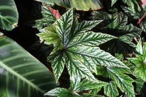 Tropical Pointy Green Leaf