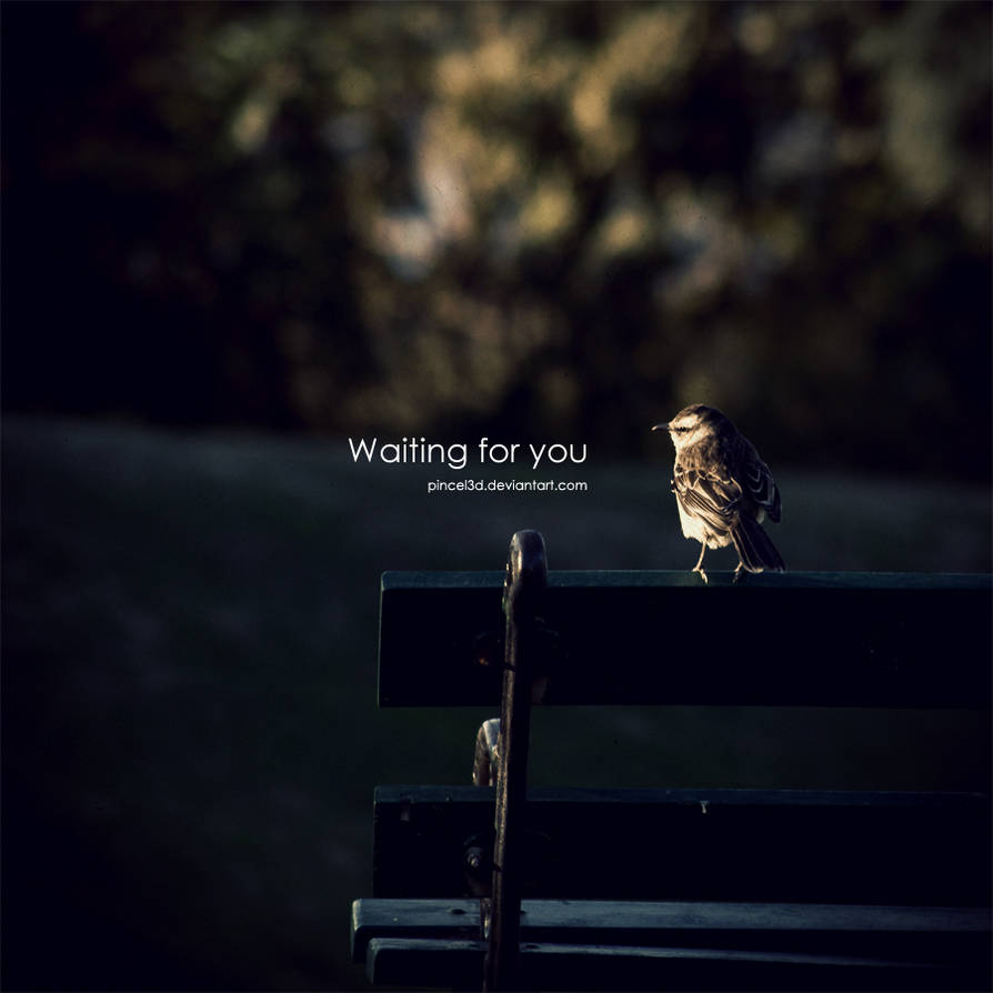 Waiting for You - Little bird