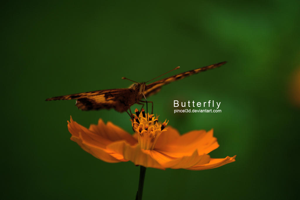 Butterfly by pincel3d