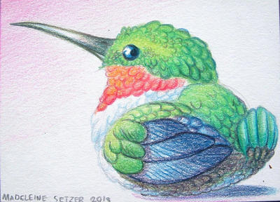 Fat Hummingbird -ACEO by a-dragon-named-percy