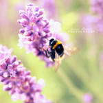 Bumblebee by MadSubstance