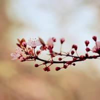 Brighten Spring