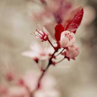 Brighten Spring II
