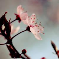 Brighten Spring III