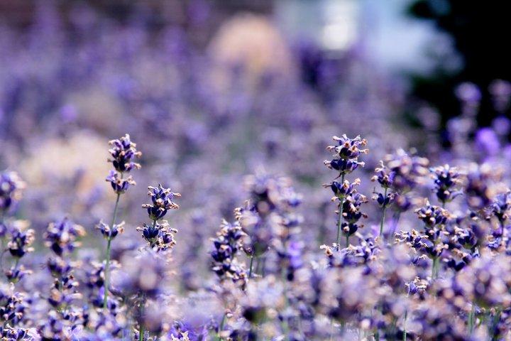 Violet sea in Greenwich. by aleksandrowa5