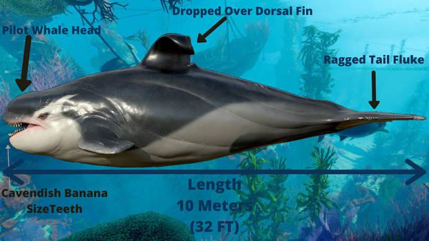 Anatomy of Apex Orca