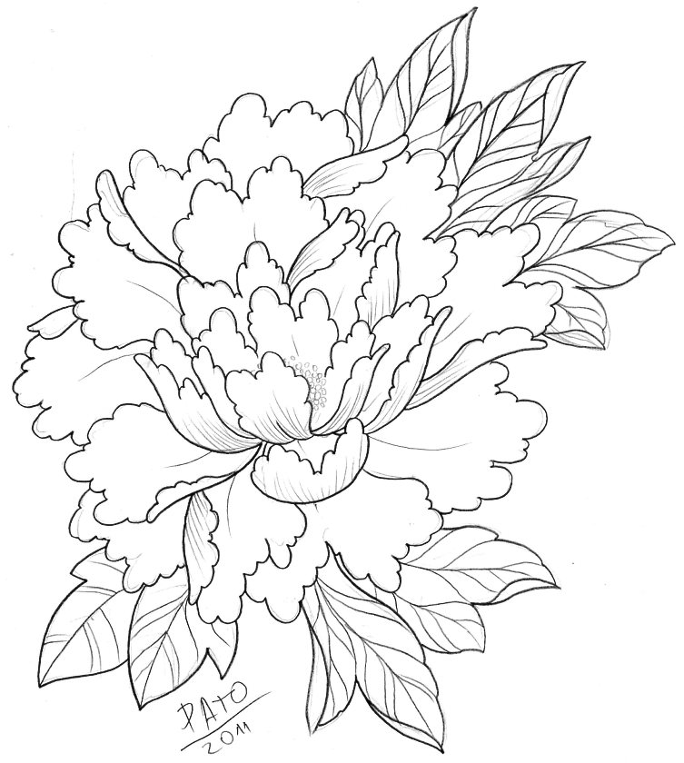 Japanese Tattoo Line Drawing : Peony by patoink on deviantart