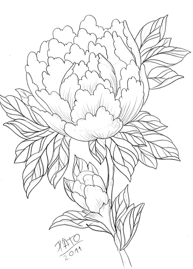 Peony Line Drawing Tattoo : Peony by patoink on deviantart