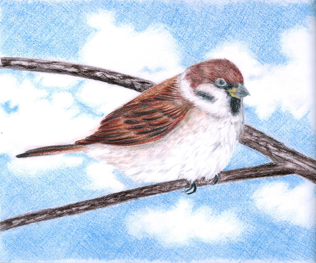 Sparrow by school53kirov