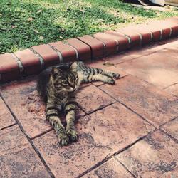Feline Recline