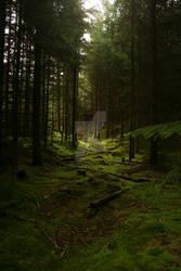Forest v3