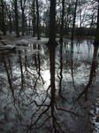 Roots Manoeuvre